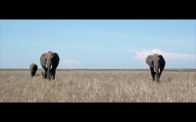 elephants-kenyan-eyes